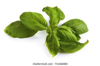 Close up studio shot of fresh green basil herb leaves isolated on white background. Sweet Genovese basil