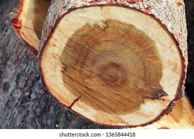 close up of stump tree.