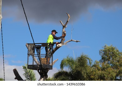 Close up of subcontractor cutting down dead tree wich poses risk to city power lines. Townsville, Australia- July 2, 2019. Townsville has a high risk of cyclones. Townsville council employed sub contr