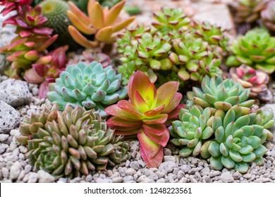 Close up of succulent and cactus in mini terrarium ,Small plant garden.Selective focus.
