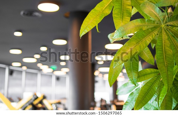 Close up of succulent plant and office view in the background, focus on the plant