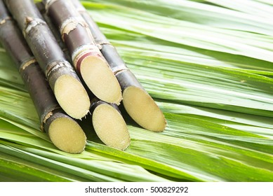 Close up Sugarcane.