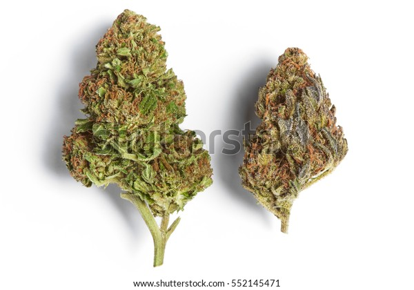 Close Super Skunk Blue Cookies Marijuana Stock Photo (Edit
