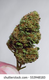 Close up of Super Skunk marijuana bud