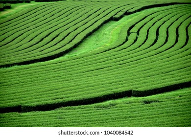 close up tea plantation image my use for background or texture