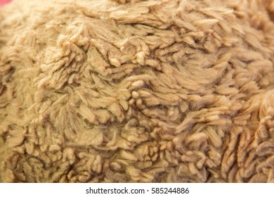 close up teddy bear fur texture