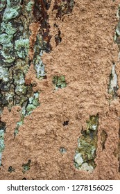 Close up termite nest on the large tree,Selective focus
