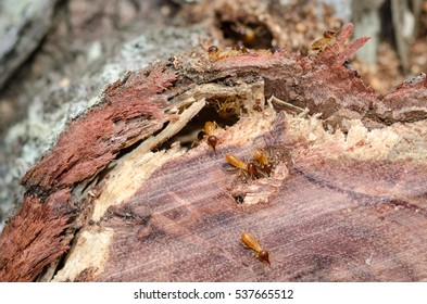 Close up of termites eating a timber log in a garden