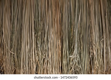 Close up texture background of brown rice straw.