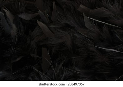 close up of texture - black feathers