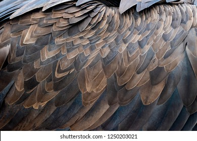 Close up texture of brown vulture feathers