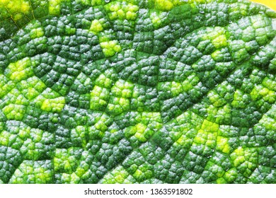 close up texture of green vein leaf