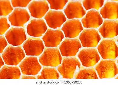 close up texture of hexagon propolis honeybee honeycomb