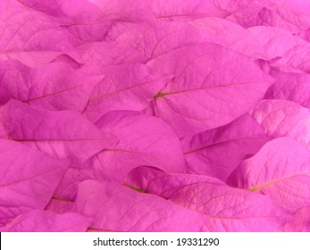 Close up to the texture of pink leaves overlapped, suitable for background