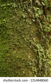 close up of texture of tree bark with moss