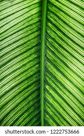 close up texture of tropical leaf background.