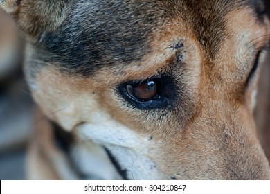 close up thai dog