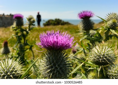 close up of thistles with blue sky