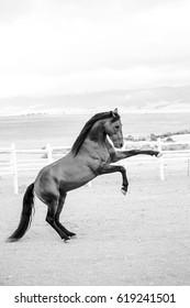 Close up of a thorough bred horse in a pen