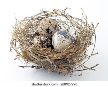close up three eggs in birds nest on white background, quail eggs waiting to hatch