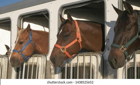 close up of three horses in a trailer near quartzite