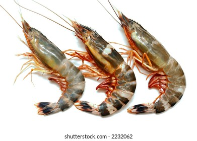 Close up of three prawns