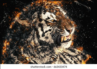 Close up of a tiger face with bare teeth of Bengal Tiger, fire illustration.