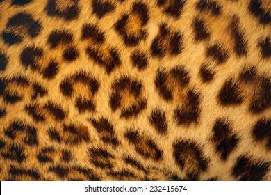 close up tiger skin texture