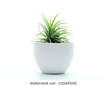 Close up of tillandsia air plant on white background - Shutterstock ID 1125693242