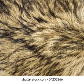 Close Up of Timber (Gray) Wolf Fur