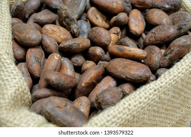 Close up of toasted cacao beans at a chocolate workshop