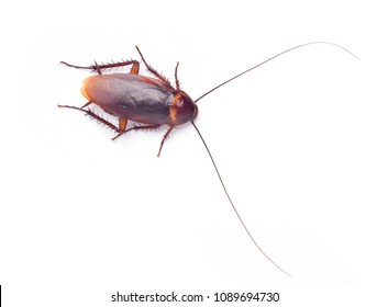 Close up top view of Cockroach isolated on white background