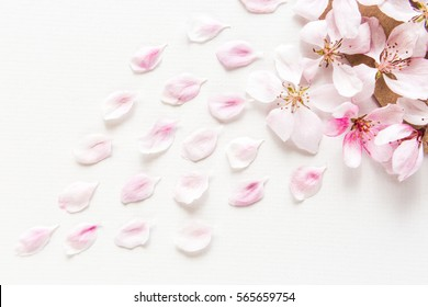 close up top view of light and soft sakura petals on white background. Concept love. Flat lay.