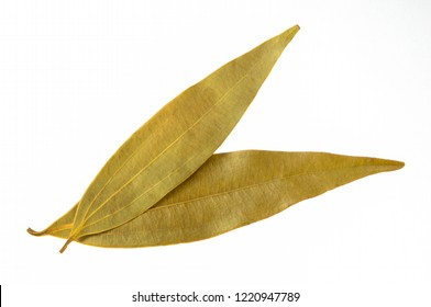 Close up  top view of two  Bay leaves isolated on white background  used for flavouring indian cooking