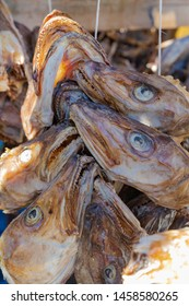 Close Up Of Traditional Drying cod heads drying on traditional wooden racks in Lofoten Islands  Fishing Village Hamnoy, Lofoten, Norway.  Heads of dried fish  - stockfish, Lofoten islands, Norway