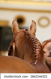Close up traditional equine braids for Doma Vaquera in Spain