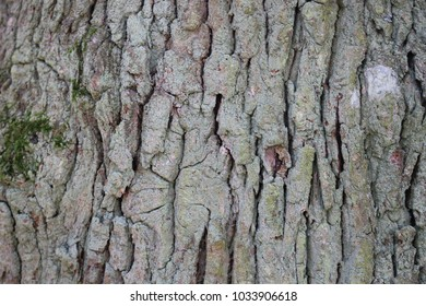 Close up of a tree.