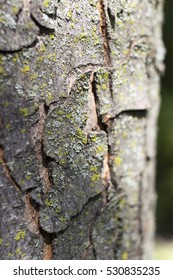 Close up of tree bark with green moss