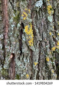 Close up of tree bark with lichens
