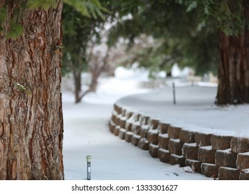 Up close tree bark with a winter snow storm in the background.  A sprinkler is sticking up through the snow.