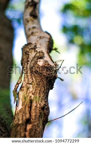 Close up of tree branch