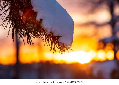 Close up of a tree branch with snow in Finland. In the background is a colorful sunset. There is also flare in the picture.