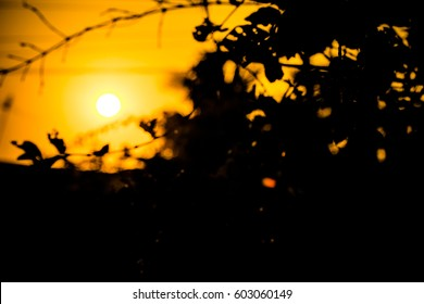 Close up tree silhouette light in twilight sunset. Orange and black landscape for wallpaper and background