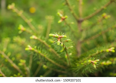 Close up tree spring new shoots. Green macro background with renewal tree in selective focus