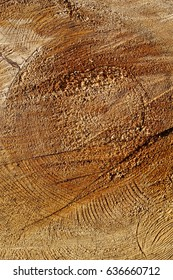 Close up of a tree trunk