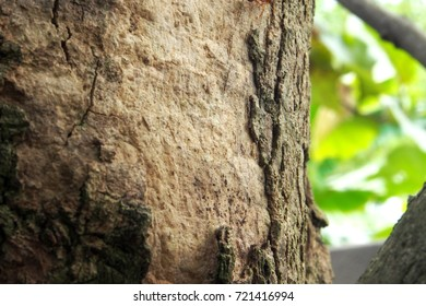 close up tree trunk