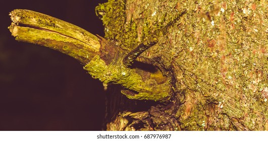 Close up of Tree Trunk Branch B, Shallow Depth of Field Split Toning Nature Macro Photography
