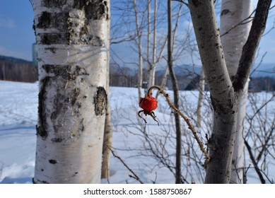 Close up of tree trunk and wild fruits in winter snowy season