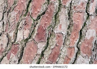 Gros plan sur un tronc de bois d'arbre avec motif diagonal.