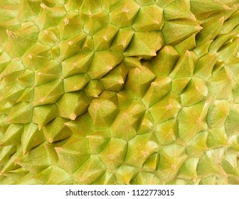 Close Up of Tropical Fresh Ripe Durian. One of The Most Popular Fruits in The World and King of Fruits in Thailand.